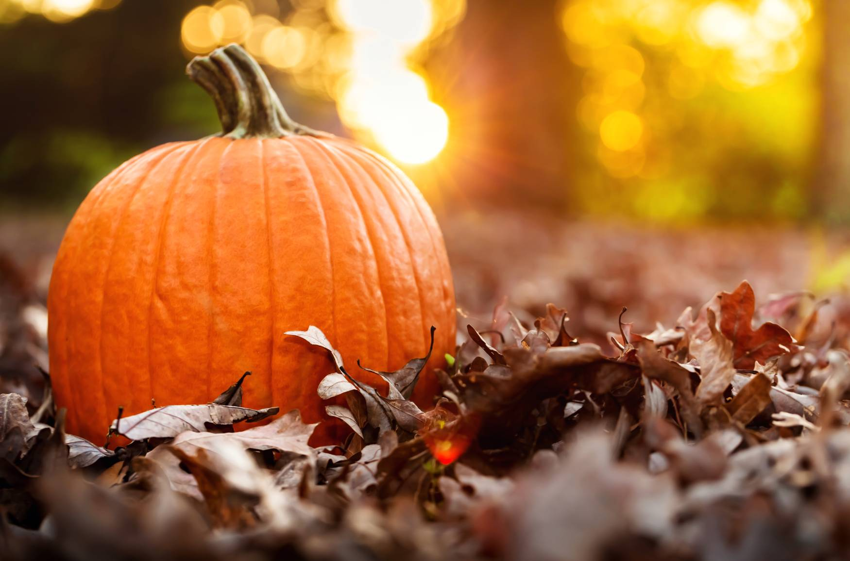 8 enjoyable fall activities for seniors