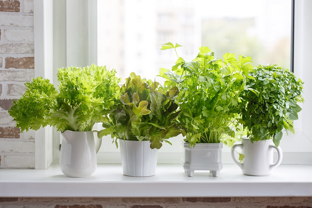 5 reasons to indoor garden for seniors